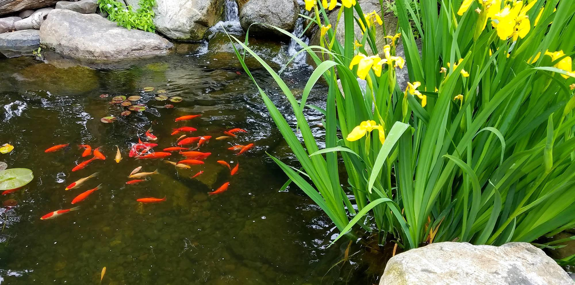 <h2>Garden Ponds</h2><p>Easy Garden Watering Ponds and Pools are a fantastic addition to any garden, Find everything you need to create your perfect pond or garden water feature Water Gardening Made Easy. ...</p>