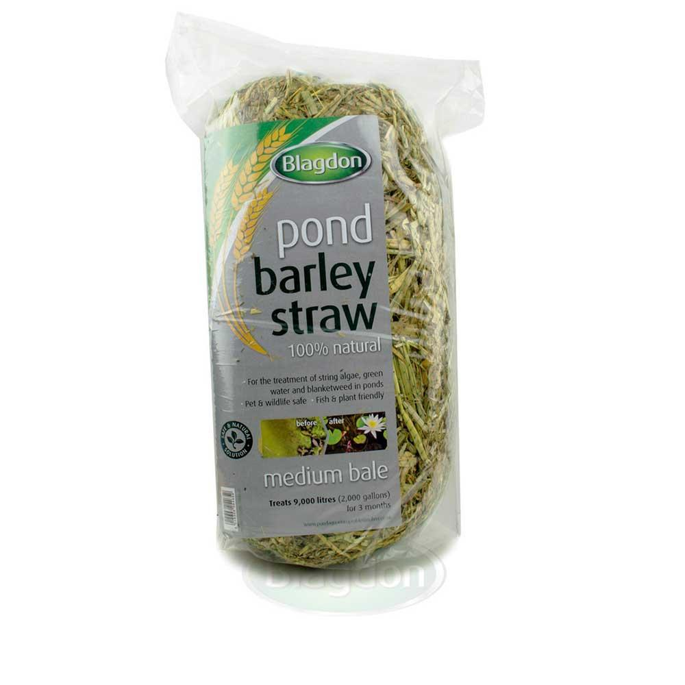 Blagdon Barley Straw Medium Bale - 1054652