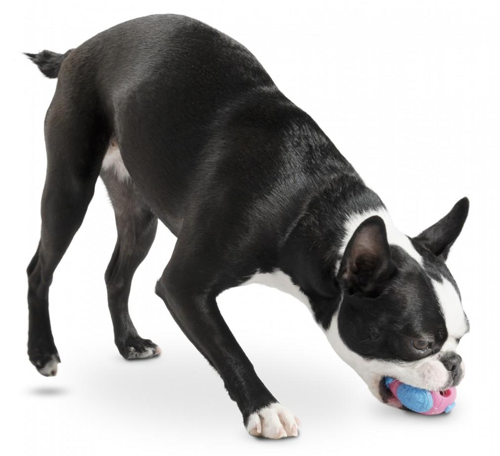 Planet Dog Orbee Tuff Orbee Ball for Dogs