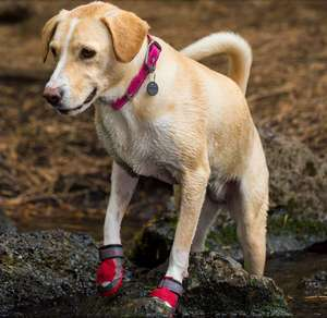 Ruffwear Grip Trex All Terrain Protective Dog Shoes in Red Currant