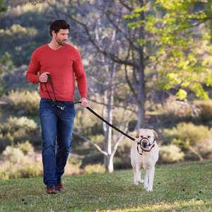Halti Training Lead For Dogs for walking