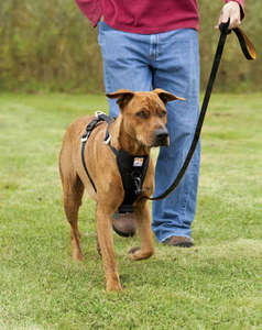 Kurgo Enhanced Strength Tru-Fit Car Harness For Dogs walking