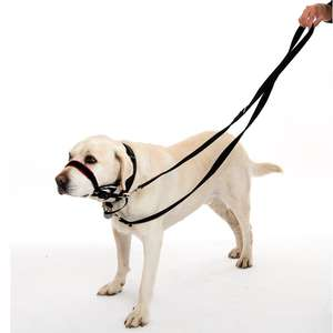 Halti Training Lead For Dogs control lead