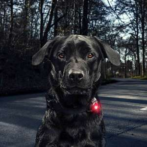 Orbiloc Dog Dual Safety LED Light