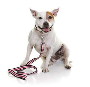 DOOG Striped Cotton Canvas Dog Collar and lead