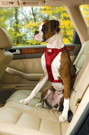 Kurgo Enhanced Strength Tru Fit Car Harness For Dogs
