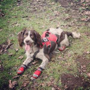 Boots By Ruffwear in Red Currant