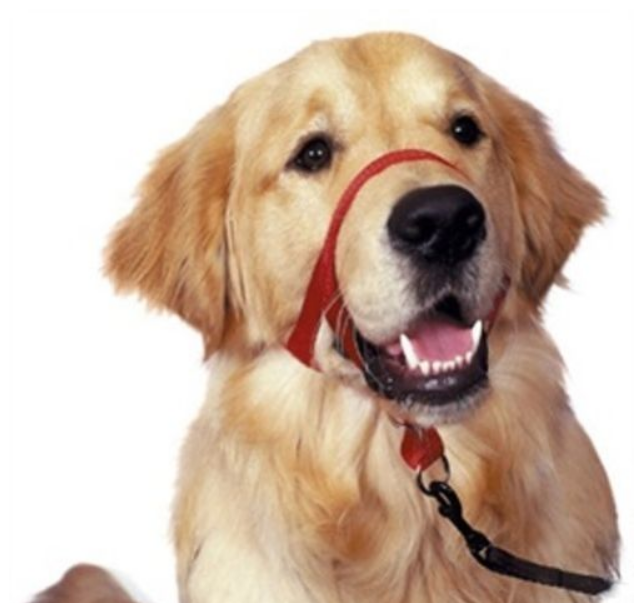 Company Of Animals Halti Head Collar for Dogs
