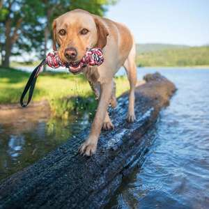 EzyDog Beaver Tail Strong Tug Toy For Dogs