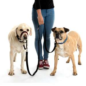 Halti Training Lead For Dogs for 2 dogs