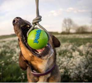 Planet Dog Orbee-Tuff Fetch Ball With Rope Play