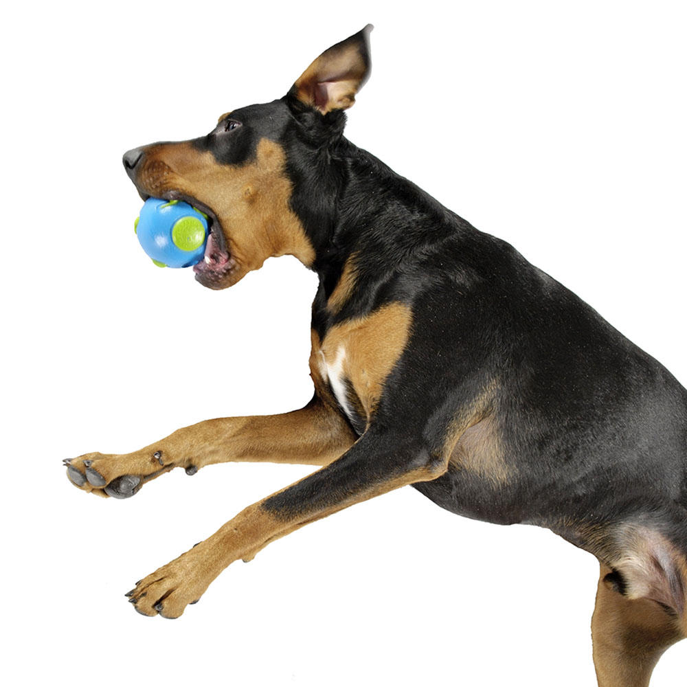 Toys For Dogs : Planet dog orbee tuff ball tough chew toy for dogs
