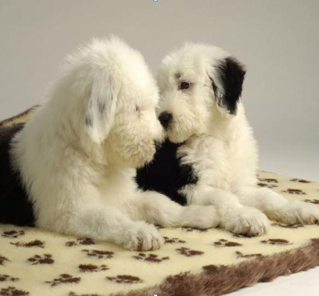 Puppy & Small Dog Bedding