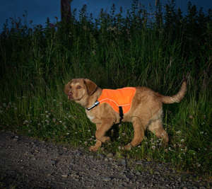 Kurgo Reflect and Protect Reflective Dog Vest