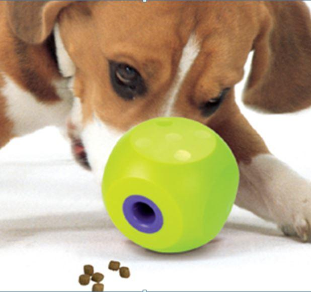dog with classic buster cube interactive treat toy