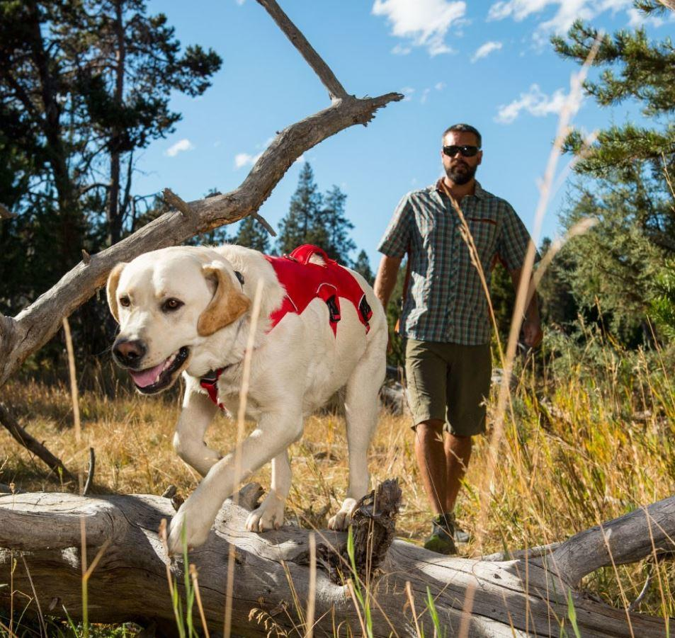Ruffwear Web Master Harness For Dogs