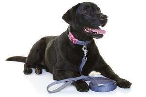 DOOG dog Leash Marley with dog