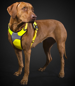 Hurtta Lifeguard Dazzle Dog Harness