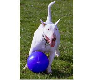 Company Of Animals Boomer Ball Dog Toy for tough chewers