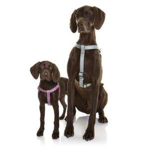 DOOG Neoprene Dog Harness Collection