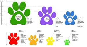 Pawz Rubber Dog Boots - Breed Guide