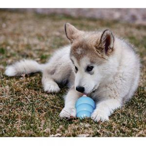 Puppy & Small Dog Toys