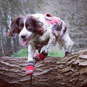 Ruffwear in Red Currant
