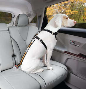 Kurgo direct to seatbelt teather for dogs