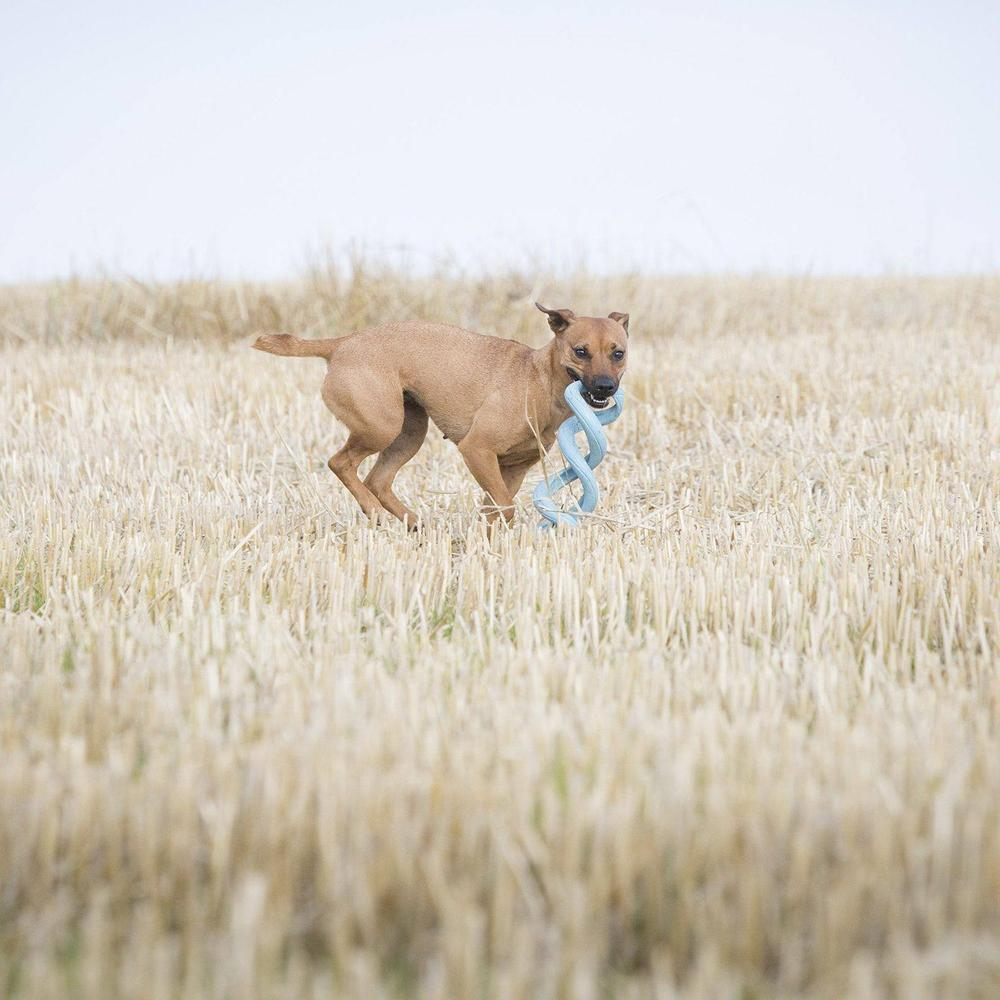 Indestructible Dog Tug Toy: Chuckit Floppy Tug Durable Tough Tug Toy For Dogs