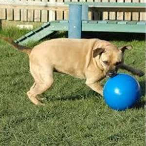 Company Of Animals Boomer Ball Durable Dog Toy