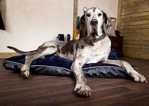 Scruffs Milan Orthopaedic Mattress For Dogs