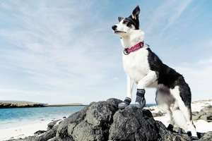 Hurtta Outback Dog Boots walking