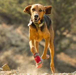 Boots For Active Dogs in Red Currant