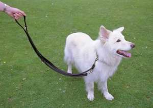 Halti Training Lead For Dogs
