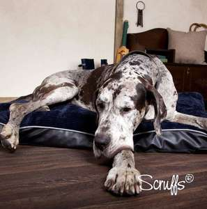 Scruffs Milan Orthopaedic Pet Mattress For Senior Dogs
