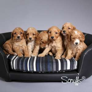 Scruffs Regent Handmade Pet Sofa Bed For Dogs