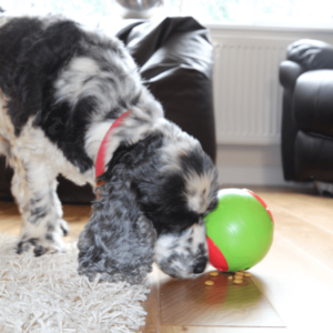 Foobler ElectronicTreat Ball For Dogs