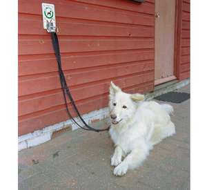 Halti Training Lead For Dogs tethered