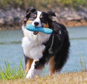 Ruffwear Gourdo Fetch Toy - Fetch