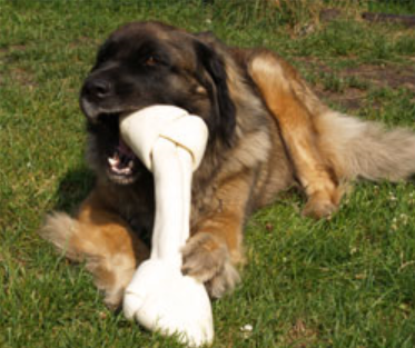 Farm Food Rawhide xx large bone with dog