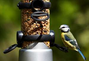 Petface LokTop Signature Stainless Steel Bird Feeder Close Up