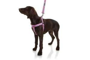 DOOG Neoprene Dog Walking Harness