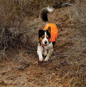 Ruffwear Track Jacket Safety Coat For Dogs