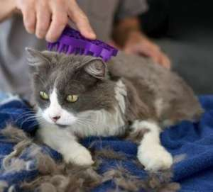 KONG ZoomGroom For Cat Deshedding