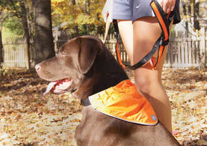 Kurgo Reflect and Protect reflective dog bandana