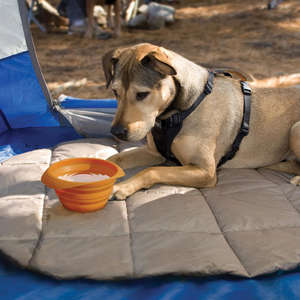 Kurgo collaps-a-bowl portable travel dog bowl