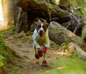 Dog Shoes By Ruffwear in Red Currant