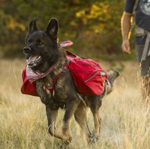 Ruffwear Palisades Pack For active dogs