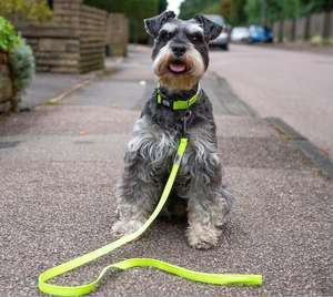 Long Paws Urban Trek Reflective Neon Lead