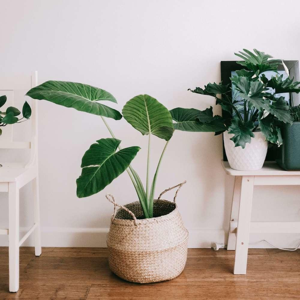 10 Easy Ways to Help the Environment Whilst at Home
